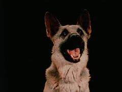 Jack Goldstein film still of 'Shane'