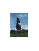 Vieques Horse TEST Prints, David Krueger, horse portraits, K4 5411