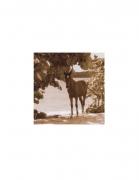 Vieques Horse TEST Prints, David Krueger, horse portraits, K4 5420