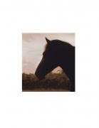 David Krueger, Vieques Horses , Horse Portraits, DG Krueger, K4 5486 (gloss/sepia)