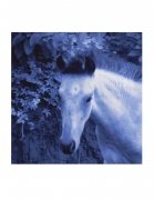 Vieques Horse TEST Prints, David Krueger, horse portraits, P4 0696