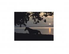 David Krueger, Vieques Horses , Horse Portraits, DG Krueger, K4 5015 (gloss/color)
