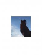 David Krueger, Vieques Horses , Horse Portraits, DG Krueger, test print, K4 4965 (gloss/color)