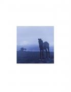 Vieques Horse TEST Prints, David Krueger, horse portraits, K4 5349 (matt/blue)