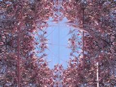 Firestorm, Pollinators, DG Krueger, digital, photographs, magnolias