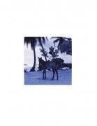 David Krueger, Vieques Horses , Horse Portraits, DG Krueger, test print, K4 5481 ((gloss/blue)