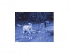 DG Krueger, Vieques Horse Portraits, K4 4612 (blue matt) 4.75x6