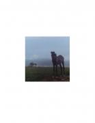 David Krueger, Vieques Horses , Horse Portraits, DG Krueger, K4 5349 (gloss/color)