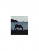 David Krueger, Vieques Horses , Horse Portraits, DG Krueger, K4 5029 (gloss/color)