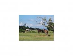 David Krueger, Vieques Horses , Horse Portraits, DG Krueger, test print, K4 5104 (gloss/color)