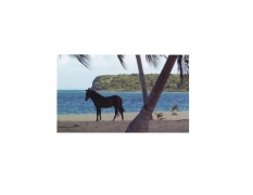 David Krueger, Vieques Horses , Horse Portraits, DG Krueger, test print, K4 4179 (gloss/color)