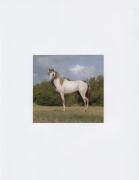 DG Krueger, Vieques Horse Portraits, K4 4697, color gloss, 4x4.125