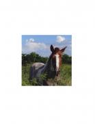 David Krueger, Vieques Horses , Horse Portraits, DG Krueger, test prints, P4 0253 (gloss/color)