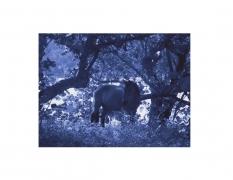 David Krueger, Vieques Horses , Horse Portraits, DG Krueger, P5 1447 (matt/blue)