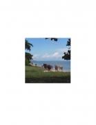 David Krueger, Vieques Horses , Horse Portraits, DG Krueger, K4 5131 (gloss/color)