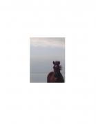 David Krueger, Vieques Horses , Horse Portraits, DG Krueger, K4 5027 (gloss/color)