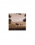 David Krueger, Vieques Horses , Horse Portraits, DG Krueger, test print, K4 5131 (gloss/sepia)