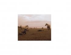 David Krueger, Vieques Horses , Horse Portraits, DG Krueger, test print, K4 5316 (gloss/sepia)