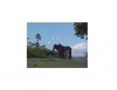DG Krueger, Vieques Horses, horse portraits, test prints, K4 5146 (matt/color)