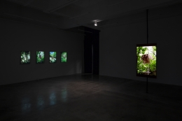 Installation view of Citizen's Forest by Park Chan-Kyong at Tina Kim Gallery, 2018
