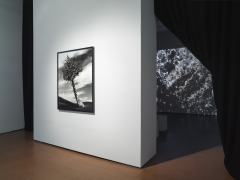 Foreground: The Fir-Palm, 1991/2012