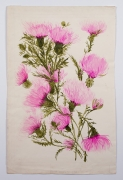 "Thistle, from the ""Florals"" series [018], c. 1973, Watercolor On Paper"