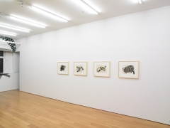 Regina Silveira, Installation view, Alexander Gray Associates, 2009