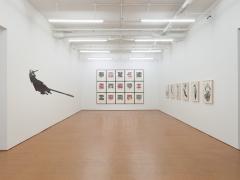Regina Silveira,Installation view, Alexander Gray Associates, 2013