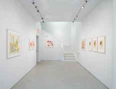 Vera Paints a Summer Bouquet, installation view, Alexander Gray Associates, 2014