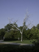 ROXY PAINE Graft, 2009
