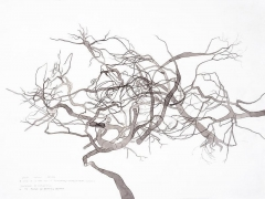 ROXY PAINE Drawing for Maelstrom, 2008