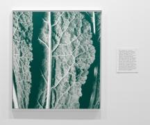 , MICHAEL PORTNOYKalochrome 1A,2014Screen print on canvas49 1/2 x 44 in. (125.7 x 111.8 cm)