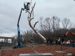 , ROXY PAINE Installation of Yield, 2011 Crystal Bridges Museum of American Art, Bentonville, AR Photo: Sheila Griffin