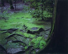 WIM WENDERS Mossy Ground, Nara, Japan,