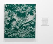 , MICHAEL PORTNOYKalochrome 5A,2014Screen print on canvas49 1/2 x 44 in. (125.7 x 111.8 cm)
