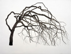 ROXY PAINE Drawing for Synapse, 2009