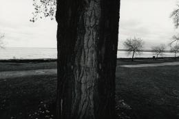 Tree, Seneca Lake, 1973