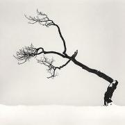 Michael Kenna, Kussharo Lake Tree, Study 6, Kotan, Hokkaido, Japan, 2007, gelatin silver print