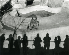Los Angeles Zoo, 1971