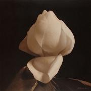 Southern Magnolia II, hand-colored gelatin silver print