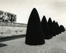 Atget's Trees, Study 2, St. Cloud, France, 1980