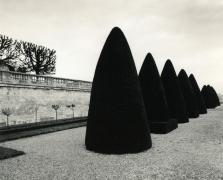 Atget's Trees, Study 2, St. Cloud, France, 1980