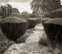 Topiary, Barnsley House, from the series In the Garden, 2003, platinum print, 16 x 18 1/2 inches