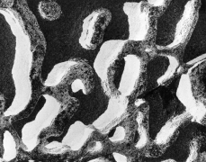 Rock, 1971 vintage gelatin silver print