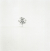 Field of Snow, Biei, Hokkaudo, Japn, 2004