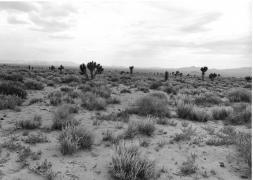 West of Caliente, Nevada, 1982