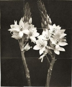"Star of Bethlehem, from the series ""Reconstructions,""platinum palladium print on handmade Japanese gampi, sewn on Japanese washi"