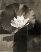 Charles Grogg Water Lily, 2009, platinum-palladium on handmade Japanese gampi sewn onto washi