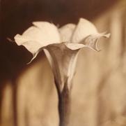 Moon Flower, Sacred Natura