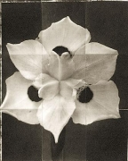 "Morea, from the series ""Reconstructions,""platinum palladium print on handmade Japanese gampi, sewn on Japanese washi"